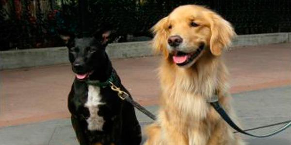 Como trabalhar passeando com cachorros