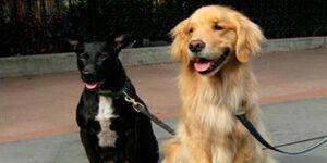 Descubra como trabalhar passeando com cachorros